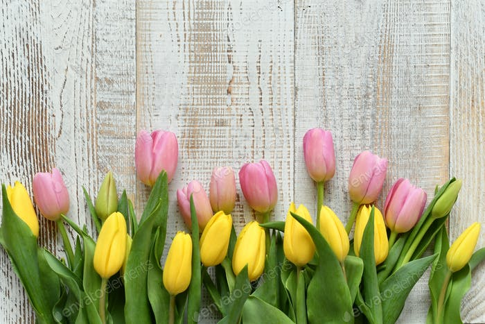 A flat lay of pink and yellow pastel tulips against a white distressed wooden background