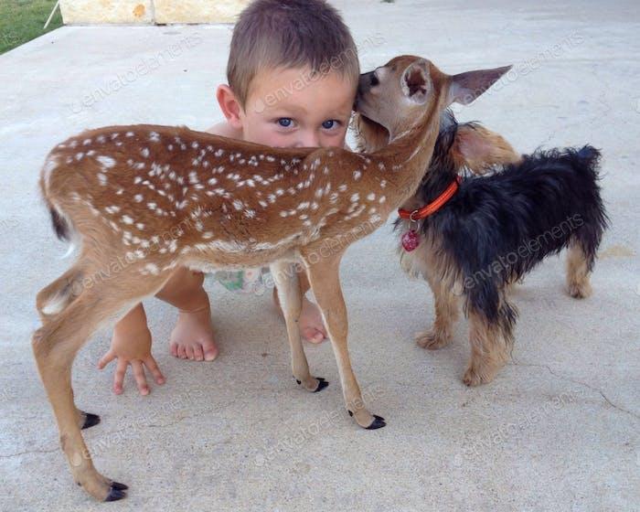 Ein kleines Kind gibt seine Liebe und Kuss zu einem Rehkitz und Welpen, wie sie ihre Liebe im Gegenzug zeigen.