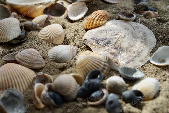 Seashells  Nominated!