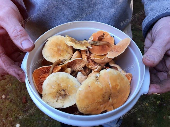 Foraging for wild mushrooms