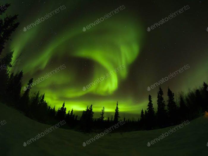 Aurora Boreal. Northern lights in Yukon.