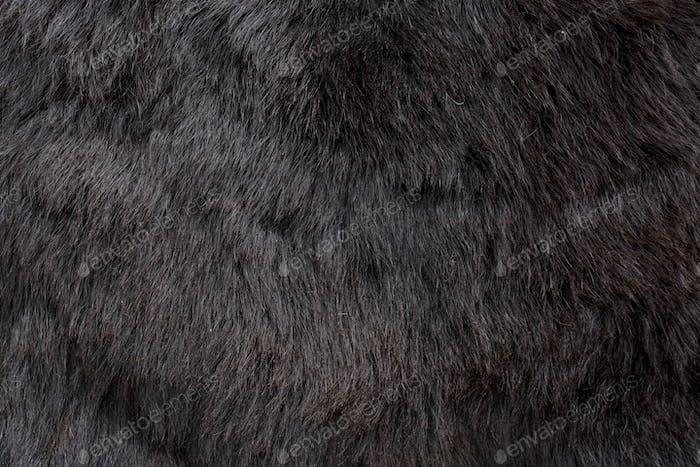 Brown bear (Ursus arctos) fur texture