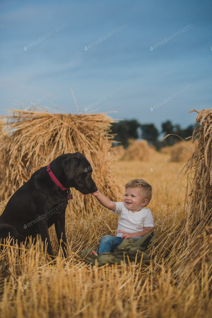 Little boy sitting in a hayfield with his dog