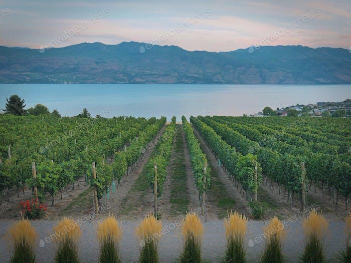 País vinícola.