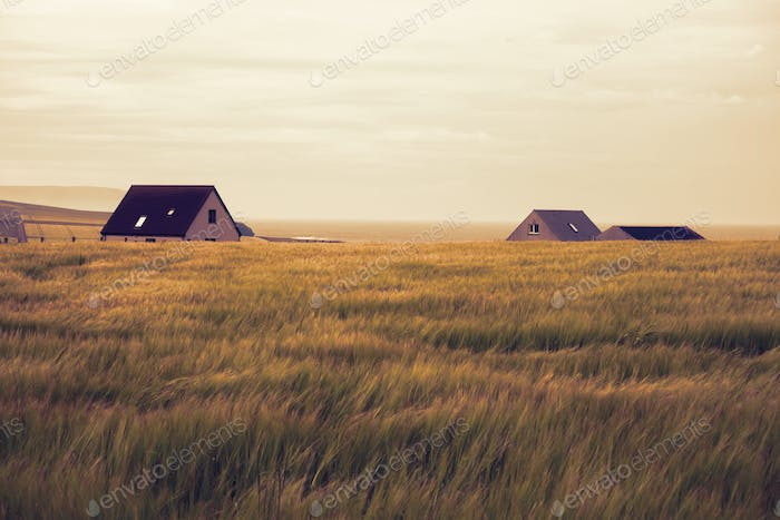 Cottages in windy field