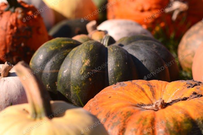 Autumn around the corner
