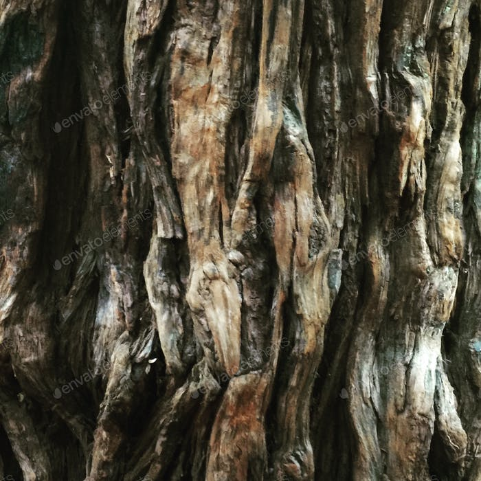 Bark from a Giant Sequoia Redwood Tree in California