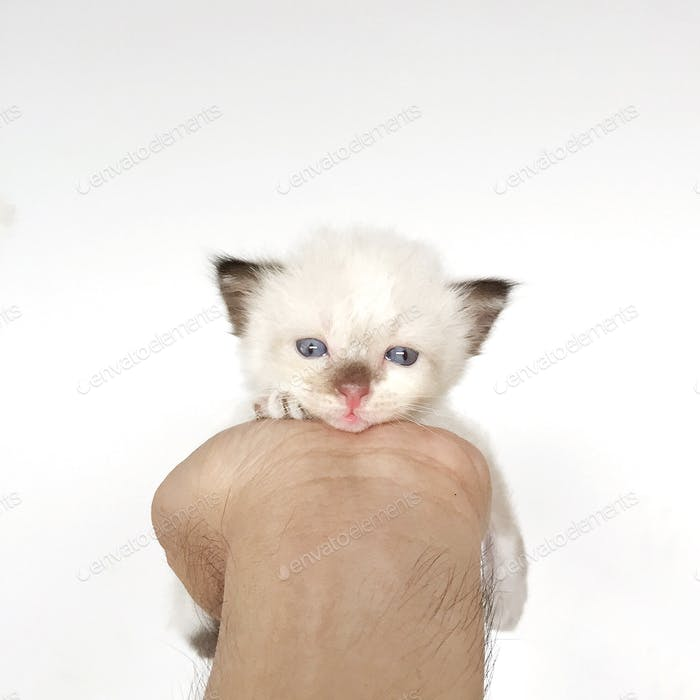 Little kitty in my hand