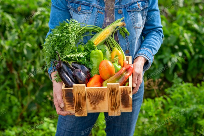 Woman demonstrating wooden crate with various vegetables. Picking vegetables concept