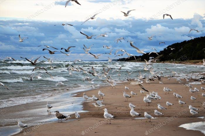 Beach landscape!  nominated