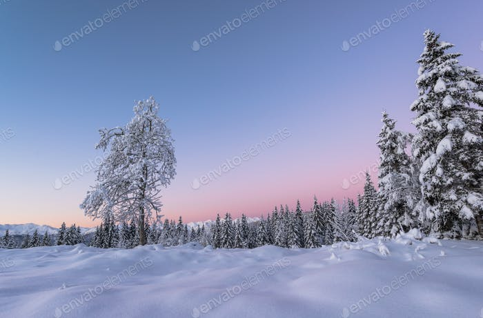 Winter fairy tale in the mountains at sunrise