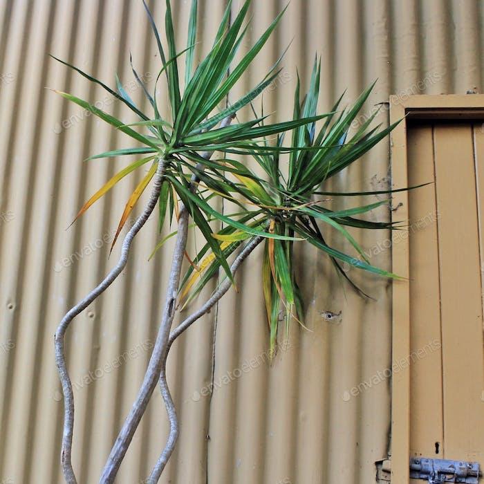 Gartenhaus und Palmen