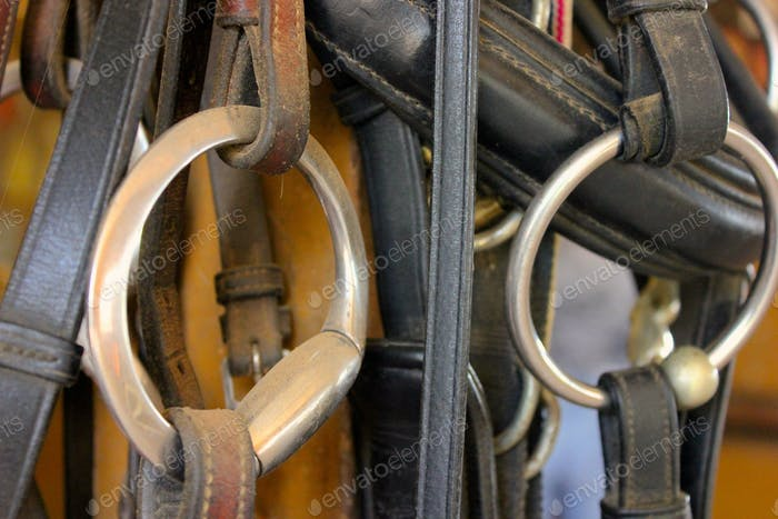 Dusty bridles hanging in a barn