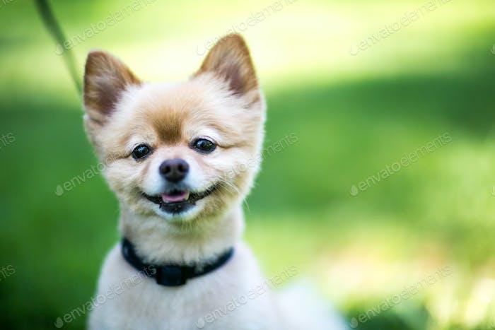 Portrait of a smiling dog.