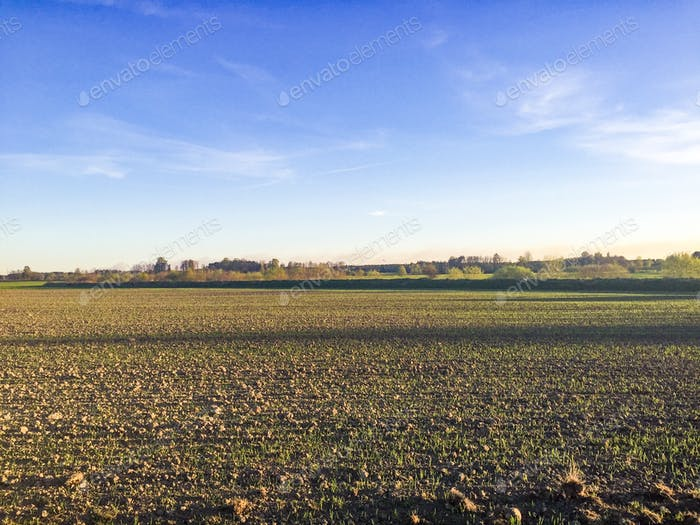 A sowing field