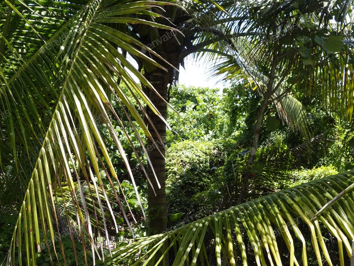 Palm Fronds And Tropical Foliage