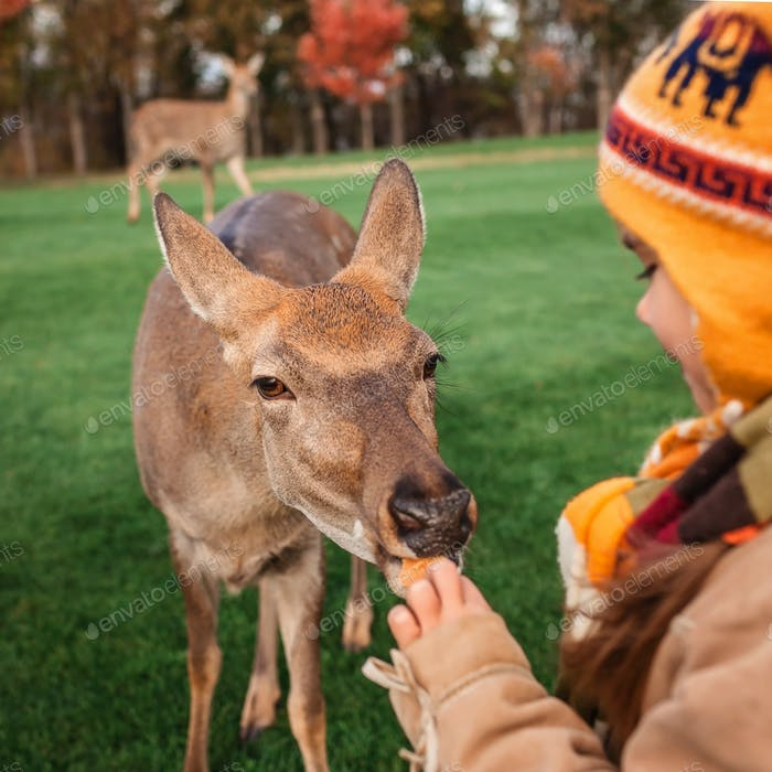 Girl stroking and feeding young deer in the park, family autumn weekend