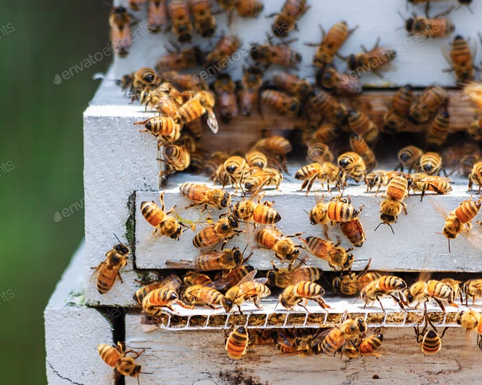 Close up photo of Bee hives