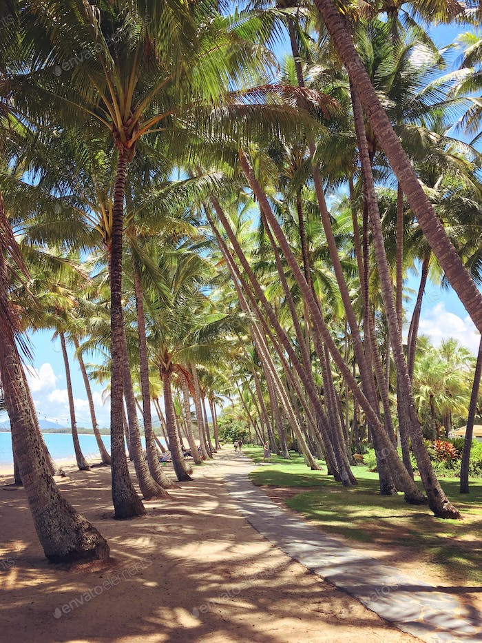 palm cove in cairns