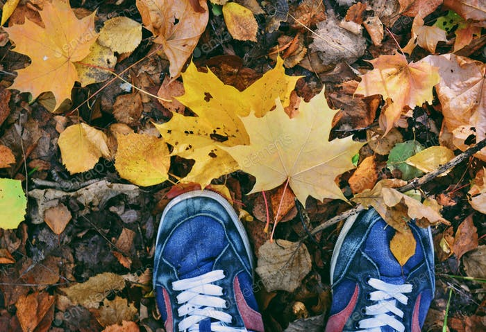 Autumn trip in forest