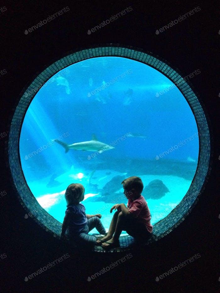 Kinder im Aquarium