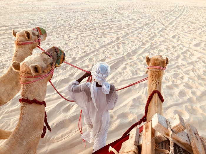 The background of desert activities and leisure as an ethical camel riding experience
