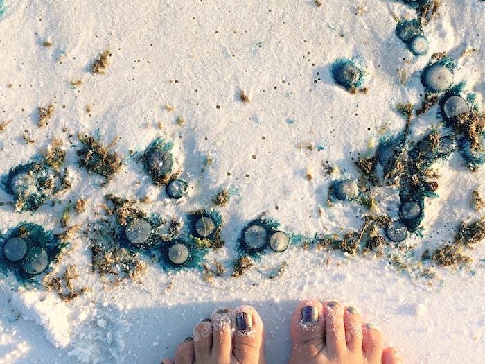 Strand Kreaturen