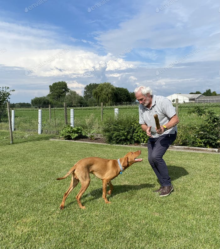 Active senior playing outdoors with a vizsla dog and a stick