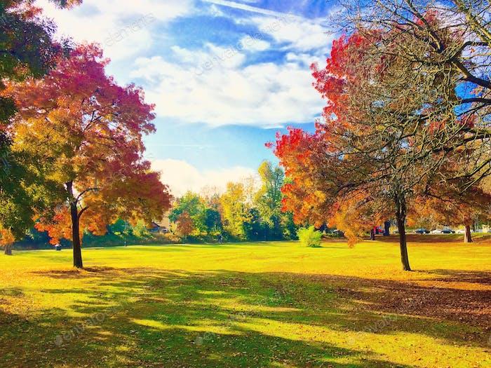 Colores de los árboles