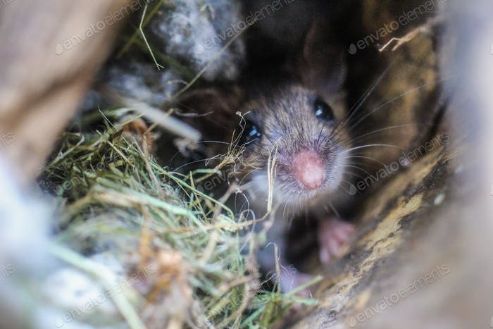 A little field mouse found an empty birdhouse and decided to move in.
