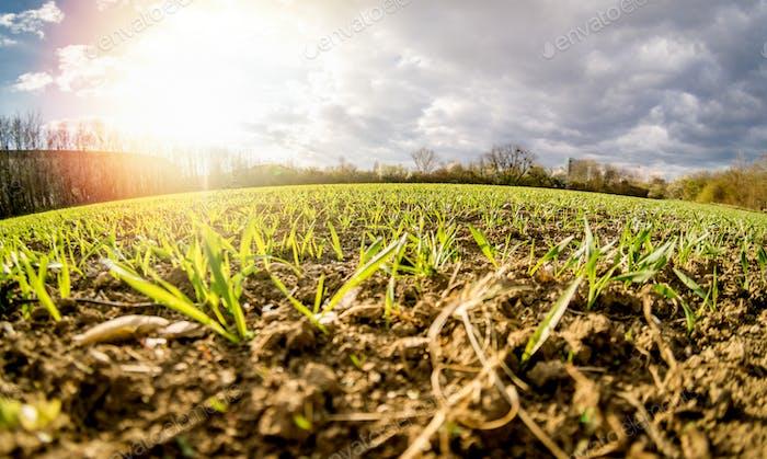 Ancho de ángulo bajo de tierra agrícola