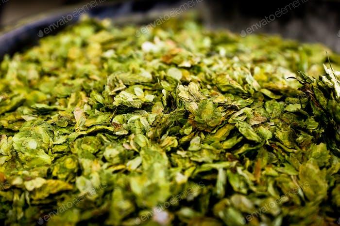 Hops at the brewery green close up