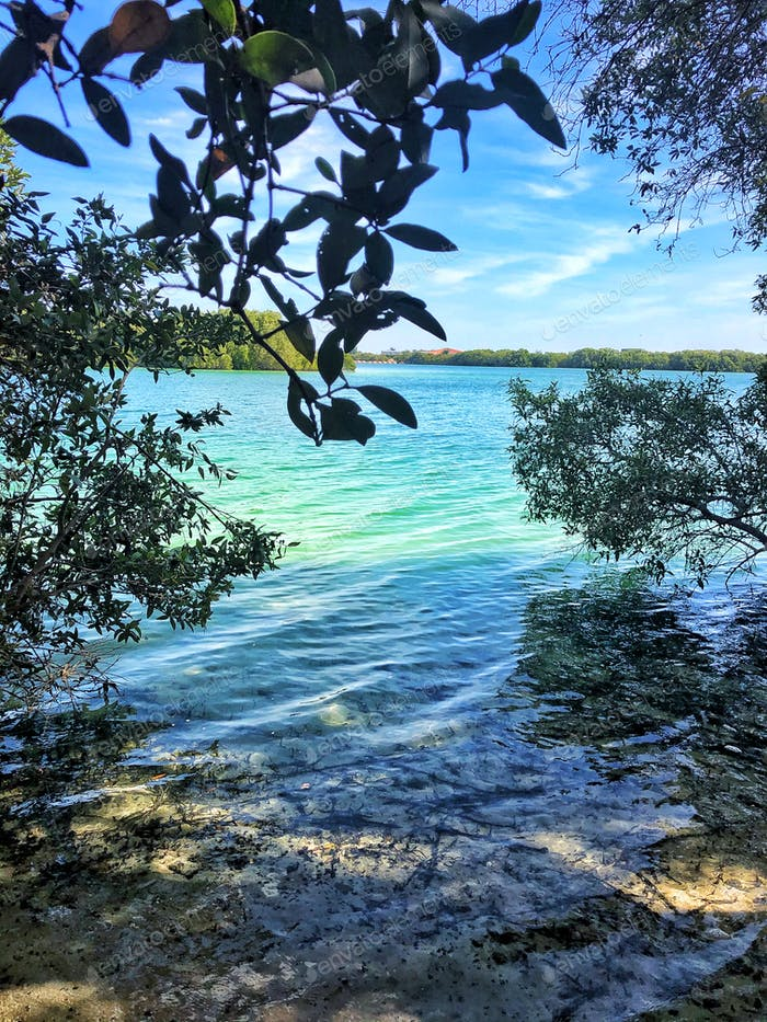 Mangroves are essential to combat global warming