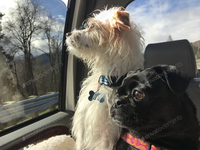 Traveling with the pups!