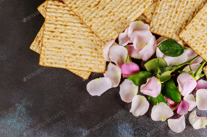 Traditional jewish Passover celebration holiday with matzo unleavened bread of fresh pink rose