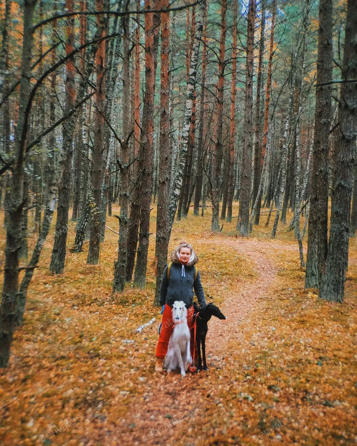 Two Russian borzois in the forest