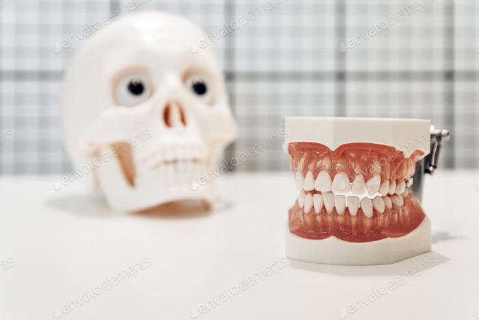 Selective focus of dental models on white background, human jaw, teeth.