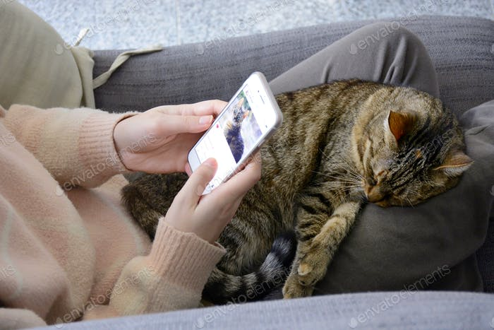 Sleeping satisfied tabby cat on lap