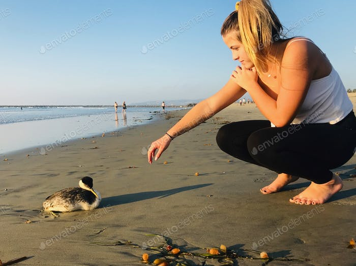 Concerned woman checking on an injured bird on the beach. Wildlife on the beach can get hurt in one