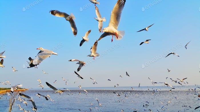 Flying seagull birds in nature outdoor recreation ocean beach background