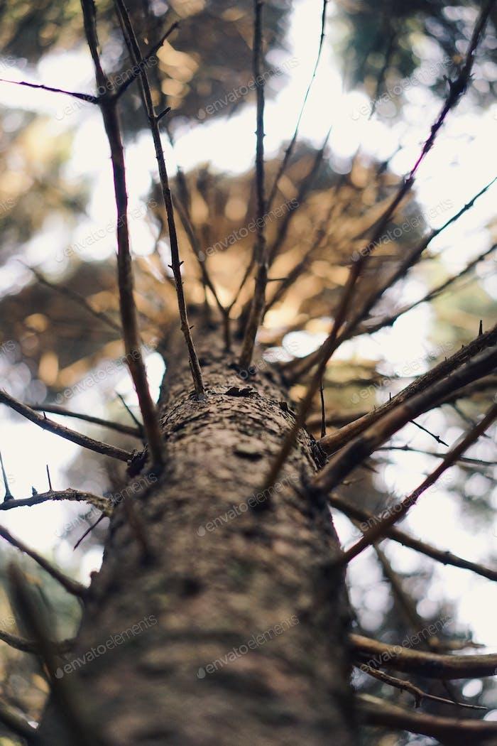 | Treetops |