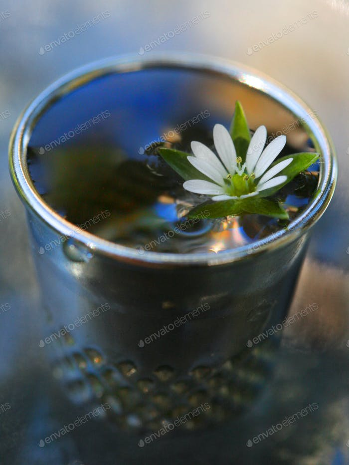 Yes, it's a regular sized thimble! Miniature water garden!!