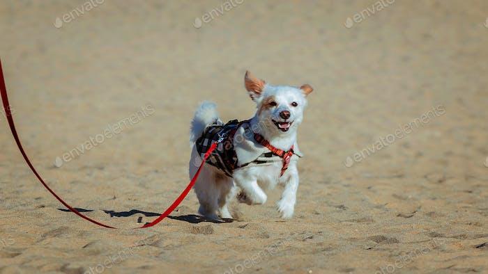 Dog freedom