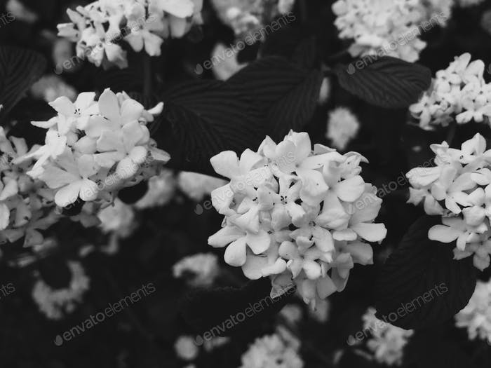 blooming just to bloom //