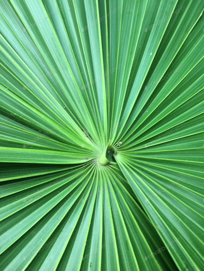 Palm frond perspective