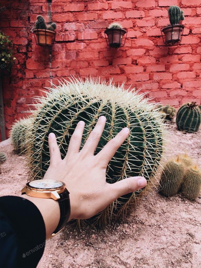 Huge! Cactus; OMG!