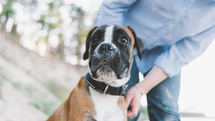 El perro es amigo de un humano