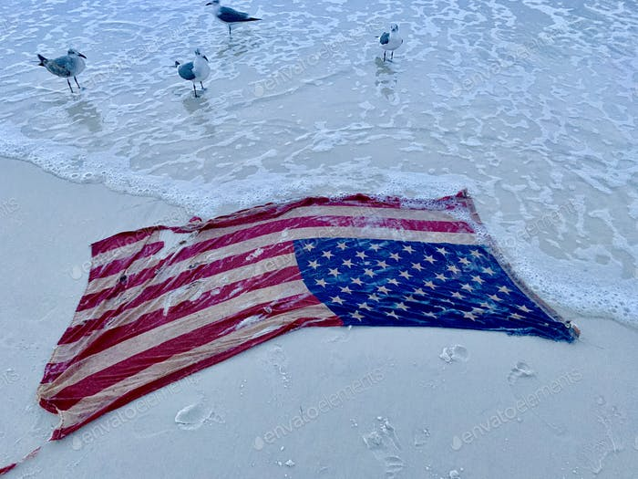 Seagulls inspecting the American flag that washed ashore on the beach