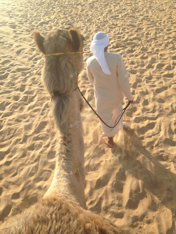 Kamelreiten in Abu Dhabi