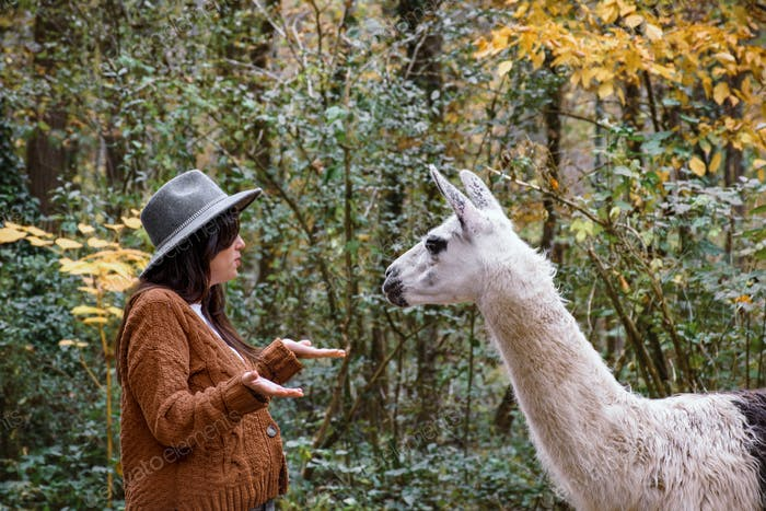 Young woman feeding a cute llama in forest. In conversation with an animal.